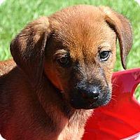 Adopt A Pet :: *Austin - PENDING - Westport, CT