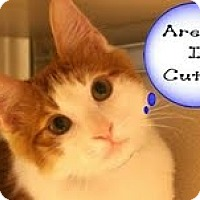Adopt A Pet :: Fritz - Arlington, VA