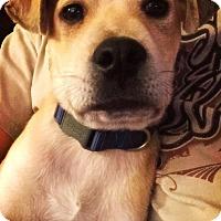 Adopt A Pet :: Fezz - San Antonio, TX