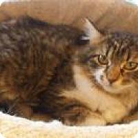 Adopt A Pet :: Isabella - Bear, DE