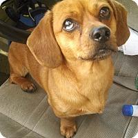 Adopt A Pet :: Dude - Kamiah, ID