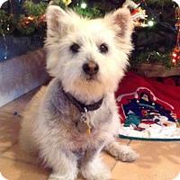 Adopt A Pet :: IZZIE-ADOPTED - Carrollton, TX