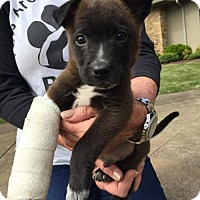 Adopt A Pet :: Marshall - Uxbridge, MA