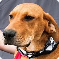 Adopt A Pet :: Jasper - Willingboro, NJ