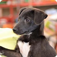 Adopt A Pet :: Edward - Albemarle, NC