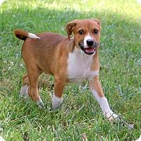 Adopt A Pet :: Danny~ meet me~ - Glastonbury, CT