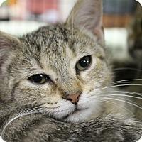 Adopt A Pet :: Kevina - Medina, OH