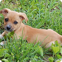 Adopt A Pet :: Charlotte(5 lb) A Character! - SUSSEX, NJ