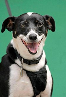 Terrier (Unknown Type, Medium) Mix Dog for adoption in Pottsville, Pennsylvania - Logan