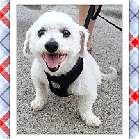 Adopt A Pet :: Luke - IL - Tulsa, OK