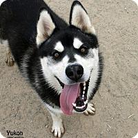 Adopt A Pet :: Yukon - Santa Maria, CA