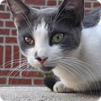 Adopt A Pet :: Screech - New York, NY