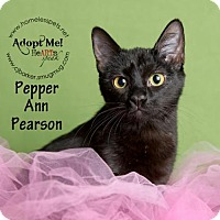 Adopt A Pet :: Pepper Ann Pearson - Houston, TX