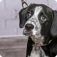 Adopt A Pet :: Alfalfa - Princeton, MN