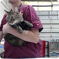Adopt A Pet :: PRUDENCE - Tavares, FL