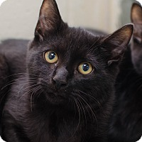 Adopt A Pet :: Sparrow - Greenwood, SC