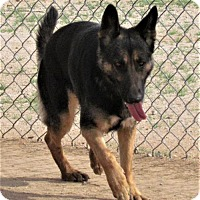 Adopt A Pet :: Samantha - San Tan Valley, AZ