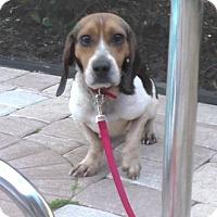 Adopt A Pet :: Alfie - Tampa, FL