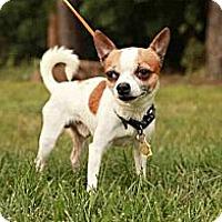 Adopt A Pet :: Louis - Lancaster, OH