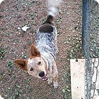 Adopt A Pet :: Koi - Phoenix, AZ