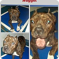 Adopt A Pet :: Nugget - Naples, FL