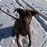 Adopt A Pet :: Scooby--URGENT! - Belleville, MI