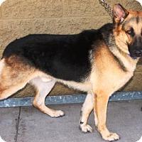 Adopt A Pet :: Omar - Gilbert, AZ