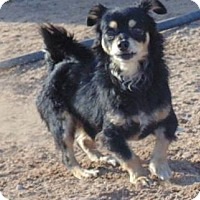 Adopt A Pet :: Boris - Las Cruces, NM
