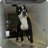 Adopt A Pet :: MOE - Louisville, KY