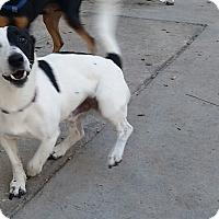 Adopt A Pet :: Dudley - Weeki Wachee, FL