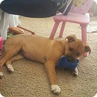 Adopt A Pet :: Luca - Phoenxville, PA