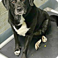 Adopt A Pet :: Mya - West Hartford, CT
