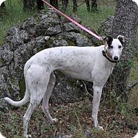 Adopt A Pet :: Ice - Walnut Creek, CA