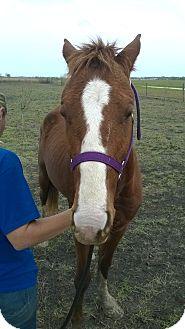 Quarterhorse/Quarterhorse Mix for adoption in Hitchcock, Texas - Carson