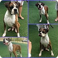 Adopt A Pet :: Arturo - Austin, TX