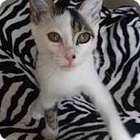 Adopt A Pet :: Tito - Miami, FL