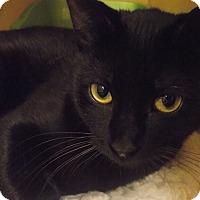 Adopt A Pet :: Macaroon *Petsmart GB* - Appleton, WI