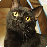 Adopt A Pet :: Mimi - Colorado Springs, CO