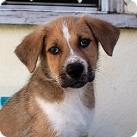 Adopt A Pet :: Mr. Snoodle - Los Angeles, CA