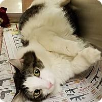 Adopt A Pet :: Howard - Elyria, OH