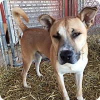 Adopt A Pet :: BANDIT! - Owenboro, KY