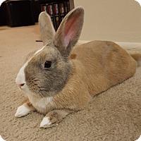 Adopt A Pet :: Luciano - Alexandria, VA