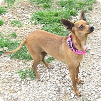 Adopt A Pet :: ZOEY - Pilot Point, TX
