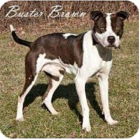Adopt A Pet :: Buster Brown - Hartland, MI