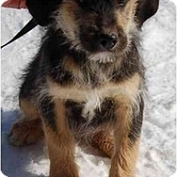 Adopt A Pet :: Maynard (AE) - Staunton, VA