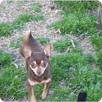 Adopt A Pet :: Scooter - Greenville, RI