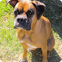 Adopt A Pet :: Lady loves kids URGENT - Sacramento, CA