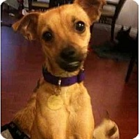 Adopt A Pet :: Lila - Pending - Vancouver, BC