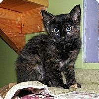 Adopt A Pet :: Dorie - Dover, OH