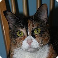 Adopt A Pet :: Martha - North Branford, CT